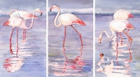 flamants-roses-ok