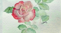 aquarelle-rose-marseille