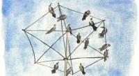 aquarelle-shity-birds