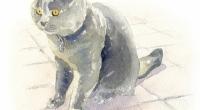 chat-doudou1