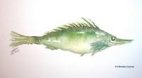 poisson-vert-ok