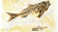 aquarelle-fossile-dapalis