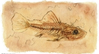 aquarelle-fossile-poisson
