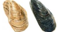 Aquarelle-moule-fossile