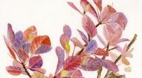 Aquarelle-arbre-perruque