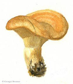 G.B. Des champignons dans la galerie